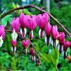 7 gode tips til din have